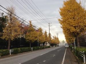富岡から弁天の道路 富岡小学校付近