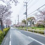 見明川沿いの桜並木。