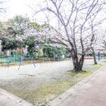 見明川団地の敷地内には公園があります。春にはお花見を楽しむことができます。