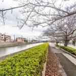 見明川沿いまで徒歩2分。春にはお花見を楽しむことができます。(周辺)