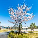 シーガーデン新浦安の中庭には沢山の花や木があります。日本らしい四季を感じることができます。