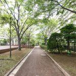 行徳ハイムの敷地内は緑が多く、日本らしい四季を感じることができます。